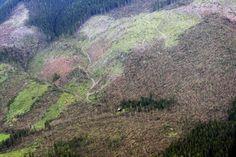 Zvyknite si na iné Tatry, prišli o ďalšie stromy. Fotili sme z vrtuľníka | Spravodajstvo | poprad.korzar.sme.sk