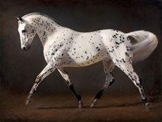 Equidae Gallery in Saratoga New York Exhibiting Artist Jaime Corum Equine Oil Paintings Pretty Horses, Horse Love, Beautiful Horses, Animals Beautiful, Appaloosa Horses, Breyer Horses, Leopard Appaloosa, Horse Artwork, Animal Paintings