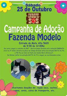 Bonde da Bardot: RJ: ADOÇÃO DE ANIMAIS EM CAMPO GRANDE NESTE SÁBADO (25/10)!