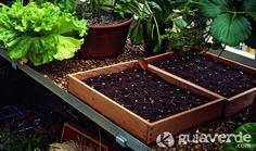 Hongos en semilleros