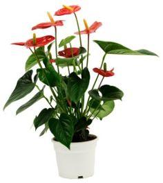 Flowers Papadakis est 1989 www.flowers4u.gr  info@flowers4u.gr tel 0030 2109426971 91,Str Zisimopoulou P.Faliro