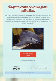 Find out how the Vaquita could be saved by drones on the Wildlife Earth Website