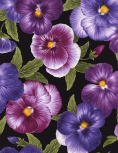 Timeless Treasures | Allover Pansies