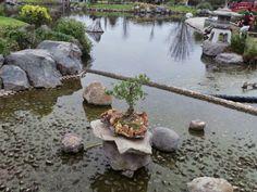 Un día de paseo en el Parque Japones Kokoro No Niwa de La Serena. con un pequeño Bonsai #ParqueJapones #KokoroNoNiwa #LaSerena #Bonsai #Chile