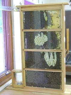 I want an indoor observation hive!