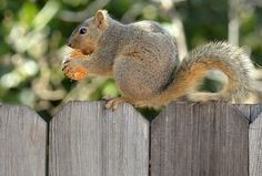 Las ardillas también comen mandarinas.   'La mirada animal', las mejores imágenes de animales en http://www.rtve.es/noticias/fotos/animales/