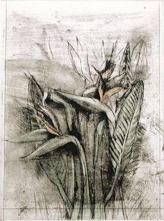View A Temple Flora Strelitzia by Jim Dine on artnet. Browse upcoming and past auction lots by Jim Dine. Jim Dine, Collage Techniques, Photo D Art, A Level Art, Gcse Art, Botanical Art, Botanical Drawings, Illustrations, Jasper Johns