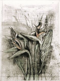 Jim Dine. I love this Jim Dine drawing. The flowers look like they ...