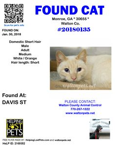 #FOUNDCAT #Shelter ID: #20180135 #Monroe (DAVIS ST)  #GA 30655 #Walton Co.  #Cat 01-30-2018! Male #Domestic Short Hair White / Orange/Picked up stray 1/30/18 on Davis St; owner unknown. Red collar with bell. Hold expires 2/2/18 at 10:20 AM. No pending applications or rescue inquiries.  CONTACT wcanimal@co.walton.ga.us          Phone: (770) 267-1322  More Info Photos and to Contact: http://ift.tt/2nrfUGp  To see this pets location on the HelpingLostPets Map: http://ift.tt/2BHeV98  Let's get…