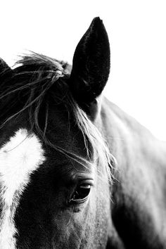 Discover recipes, home ideas, style inspiration and other ideas to try. Equine Photography, Animal Photography, Photography Portraits, Photography Ideas, White Photography, Beautiful Horses, Animals Beautiful, Cute Animals, Horse Girl