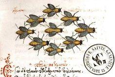 Medieval illustration from beekeeping manuscript