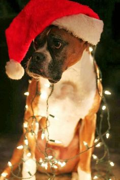 The things I go thru to keep my owner happy. Merry Christmas!