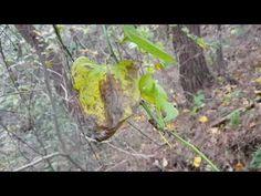 풍(風)을 한방에 치료하는 이~뿌리?, 뼈를 20대,30대처럼 튼튼하게 만드는 이~뿌리? - YouTube Fruit