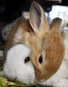 Awwwww!  Photo: Romeo Gacad, AFP / Getty Images / SF ~ Bunny :)