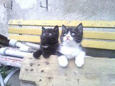 Simba und Frodo Katze | Pawshake