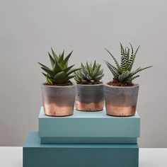 more copper dipped plant pots - available in grey concrete and white, 18 pounds, comes with a plant from Geo Fleur Concrete Pots, Concrete Crafts, Concrete Projects, Concrete Planters, Copper Planters, Diy Projects List, Project List, Painted Pots, Diy Arts And Crafts