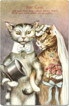 New Wedding Card Illustration Vintage Postcards Ideas Cat Wedding, Wedding Cards, Wedding Advice, Wedding Images, Trendy Wedding, Perfect Wedding, Crazy Cat Lady, Crazy Cats, Image Chat