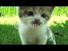 ▶ www.rustmomentindeklas.nl tip ǀ Relaxation For Children - Music for Learning, Quiet, Positive, Harmony - PURE RELAX - YouTube
