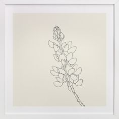 """""""Lupine"""" - Art Print by Jorey Hurley in beautiful frame options and a variety of sizes."""