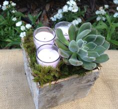 holiday perfect for table tops, birch bark box is filled with votives, moss and a succulent.