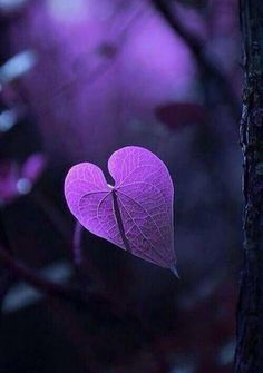 Even nature recognizes the power of a purple heart… Purple Love, All Things Purple, Shades Of Purple, Deep Purple, Purple Hearts, Purple Stuff, Plum Purple, Heart In Nature, Heart Art