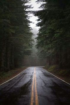 beautiful road trip inspiration. open road. forest. nature. inspiration.