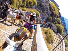 #travel #donkey #santorini #greecevacation