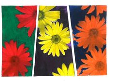 Con le classi prime stiamo continuando la nostra avventura alla scoperta dei colori. Oggi abbiamo lavorato con i colori complementari su fotocopie in bianco e nero raffiguranti dei fiori. Per color…