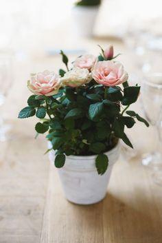 Pot of Flowers   Weddings   Floral Decorations   Flowers   Wedding Decor   #flowers #weddingdecor #weddings #floraldesigns   www.starlettadesigns.com