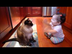 Cat Video: Baby Talks To A Siamese Cat. A baby talks to her her very gentle and patient Siamese cat. Over 1 million views. - www.catfaeries.com/videos/2017/06/05/cat-video-baby-talks-to-a-siamese-cat/ - www.catfaeries.com - Products for good behavior & health for the modern housecat. #cat# #cats #catvideo #siamese #siamesecat