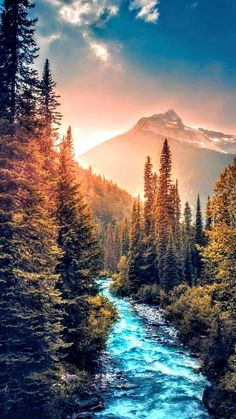 Ideas for beautiful tree photography scenery god Beautiful World, Beautiful Places, Beautiful Pictures, Beautiful Forest, Amazing Places, Natur Wallpaper, Nature Pictures, Amazing Nature, Beautiful Landscapes
