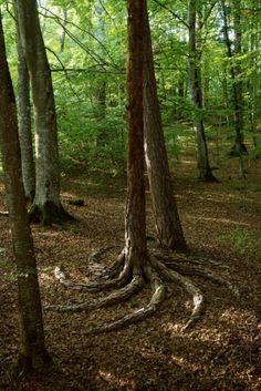Twisting Tree