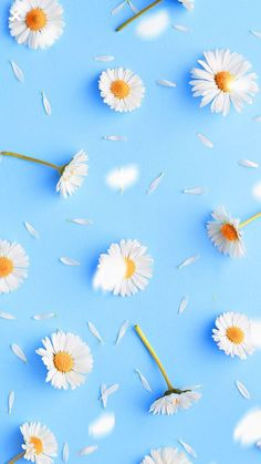 66 Ideas For Wall Paper Flores Margaritas Daisy Flowers Flower Phone Wallpaper, Summer Wallpaper, Iphone Background Wallpaper, Blue Wallpapers, Pretty Wallpapers, Colorful Wallpaper, Aesthetic Iphone Wallpaper, Cool Wallpaper, Mobile Wallpaper