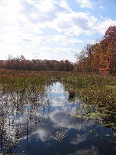 Great Swamp, NJ