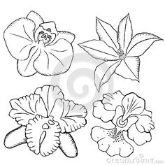 Orchids. contour flowers on a white background.