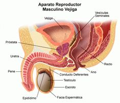 ibuprofeno para próstata agrandada