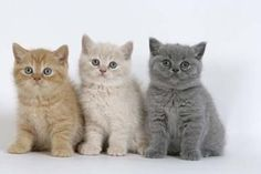 3 chaton tros mimi - les chats                                                                                                                                                                                 Plus