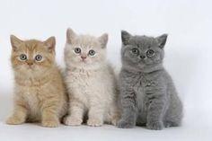 3 chaton tros mimi - les chats