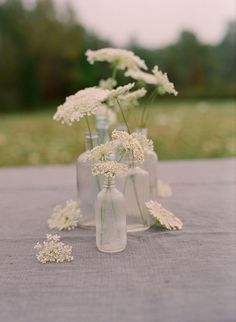 Queen Anne's Lace | Tumblr