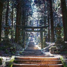 今日、高森に行ったのは、ここに行くため。 神秘的すぎると話題のパワースポットらしいです。 長い参道の脇には100基ほどの灯篭が並んでいます。…