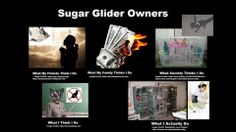 Sugar Glider Owners
