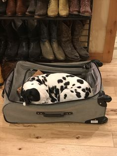 Ready for vacation.