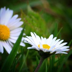 Tusindfryd ved Brylle #visitfyn #visitdenmark #fyn #nature #nature_perfection #naturelovers #mothernature #natur #loves_skyandsunset #loveit #denmark #danmark #dänemark #landscape #assensnatur #mitassens #vildmedfyn #fynerfin #vielskernaturen #visitassens #instapic #picoftheday #spring #brylle #assens #forår #flowers