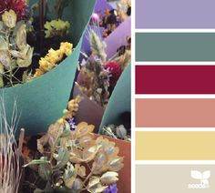 dried flora hues