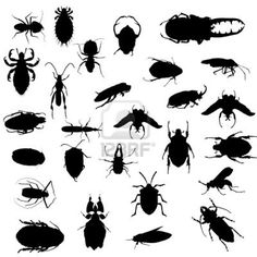 I like those silhouettes! very simple yet easily recognizable Silhouettes, Bugs, Google Search, Simple, Beetles, Silhouette, Beetle, Insects
