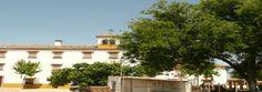 Aceite de Oliva, desde Andújar directo a la puerta de su casa. El mejor Aceite de Oliva Virgen Extra Picual.