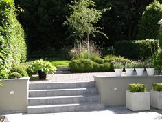 Thomas Leplat - own garden in Anzegem
