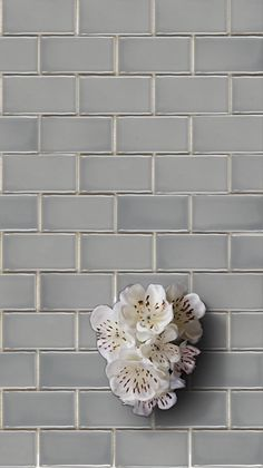 Get the look of classic subway tiles with this easy-to-install mesh-backed mosaic! This mosaic comes in four modern colors that are perfect for creating timeless designs. Grey Subway Tiles, Modern Colors, Kitchen Inspiration, Mosaic Tiles, Timeless Design, Backsplash, Home Improvement, Porcelain, Mesh