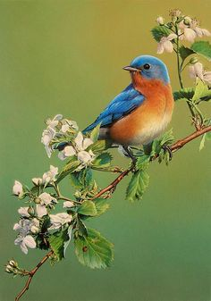 """blue bird paintings  