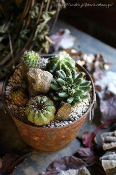 フローラのガーデニング・園芸作業日記-サボテン 多肉植物 寄せ植え